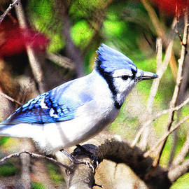 Trina  Ansel - Beautiful Blue Jay with Texture