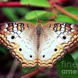 Carol Groenen - Beautiful Butterfly