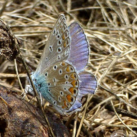 Katja Sauer - Beautiful butterfly