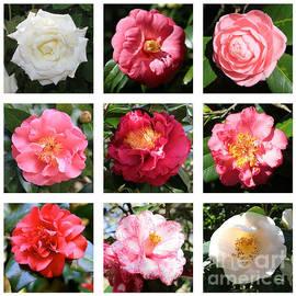 Carol Groenen - Beautiful Camellias Collage