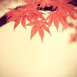 Hannes Cmarits - Beautiful Fall