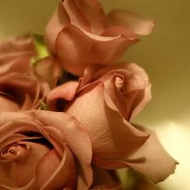 Tara  Shalton - Beautiful Golden Roses