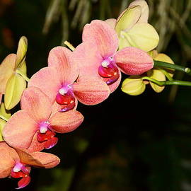 Dimitry Papkov - Beautiful Orchids