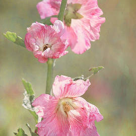 Sabrina L Ryan - Beautiful Pink Hollyhock Flowers