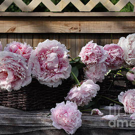 Luv Photography - Beautiful Pink Peonies