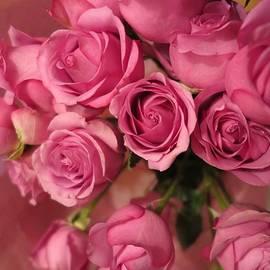 Tara  Shalton - Beautiful Pink Roses 5