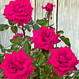 Bruce Nutting - Beautiful Pink Roses