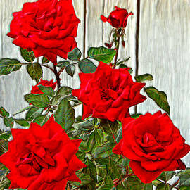 Bruce Nutting - Beautiful Red Roses