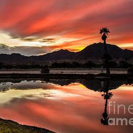 Robert Bales - Beautiful Reflections