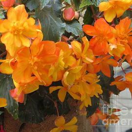 Lorita Montgomery - Beautiful Scottish Flowers