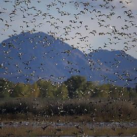Larry  Gury - Beautiful Sutter Buttes