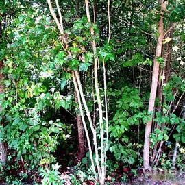Gardening Perfection - Beautiful Trees