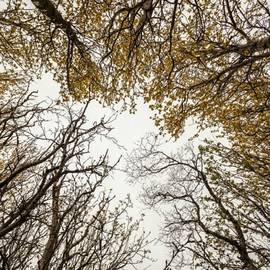 Benjamin Hardman - Beautiful Trees In Reykjavik