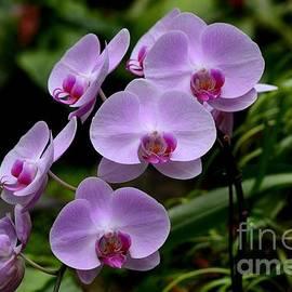 Imran Ahmed - Beautiful violet purple orchid flowers
