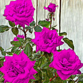 Bruce Nutting - Beautiful Violet Roses