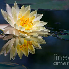 Sabrina L Ryan - Beautiful Water Lily Reflection