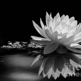 Sabrina L Ryan - Beautiful Water Lily Reflections