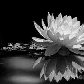 Sabrina L Ryan - Beautiful Water Lily Reflections