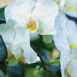 Rosemarie E Seppala - Beautiful White Orchids And Ivy