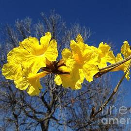Linda De La Rosa - Beautiful winter bloom