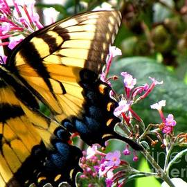 Gardening Perfection - Beauty Butterfly