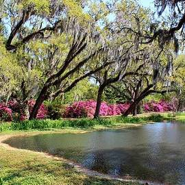 Cynthia Guinn - Beauty By The Pond