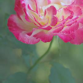 The Art Of Marilyn Ridoutt-Greene - Beauty in the Garden