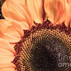 KJ DeWaal - Beauty of A Sunflower
