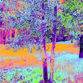 Ann Johndro-Collins - Beauty of an Aspen Grove