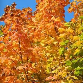 Chalet Roome-Rigdon - Beauty of Autumn