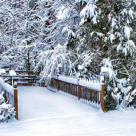 Kathy Jennings - Beauty of Winter
