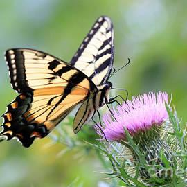 Geoff Crego - Beauty On Wings