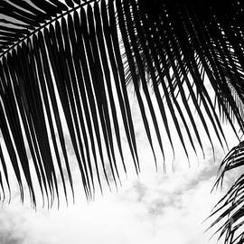 Sharon Mau - Maui Paradise Palms Hawaii Monochrome