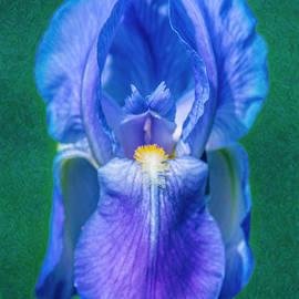 Omaste Witkowski - Beckoning Blue Iris Abstract Garden Art by Omaste Witkowski