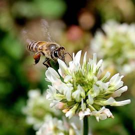 Vishal Kumar - Bee and The Flower
