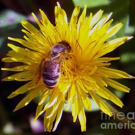 Marius Mitea - Bee At Work