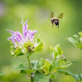 Bill  Wakeley - Bee Balm Bumble Bee