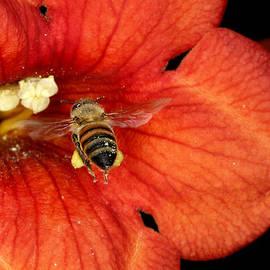 Gerald Marella - Bee Line
