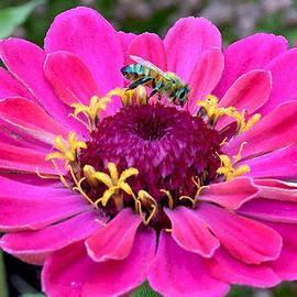 Michele  Avanti - Bee on Fuschia Flower