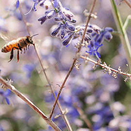 Janice Rae Pariza - Bee on Lavender