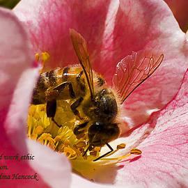 Michael Whitaker - Bee Working Hard