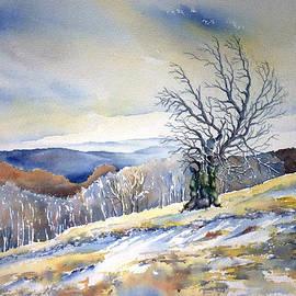 Thomas Habermann - Beech tree 8