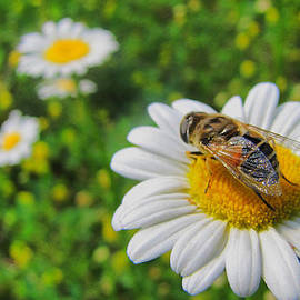 Maciej Froncisz - Honey Bee Pollination Services