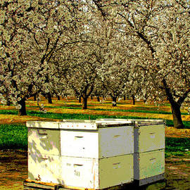 Joseph Coulombe - Bees Work 4 Food