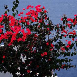 Colette V Hera  Guggenheim  - Bella Flowers Santorini Island Greece