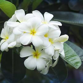 Sharon Mau - Belle fleur de l