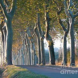 France  Art - Beloved Plane Trees