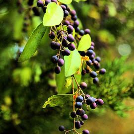 Karry Degruise - Berries of Winter