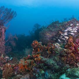 Sandra Edwards - Beyond The Reef