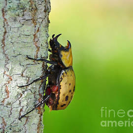 Al Powell Photography USA - Big Bad Beetle